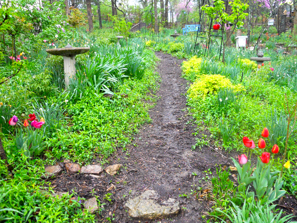 A few tulips welcome you to this garden path. (Photo by Charlotte Ekker Wiggins)
