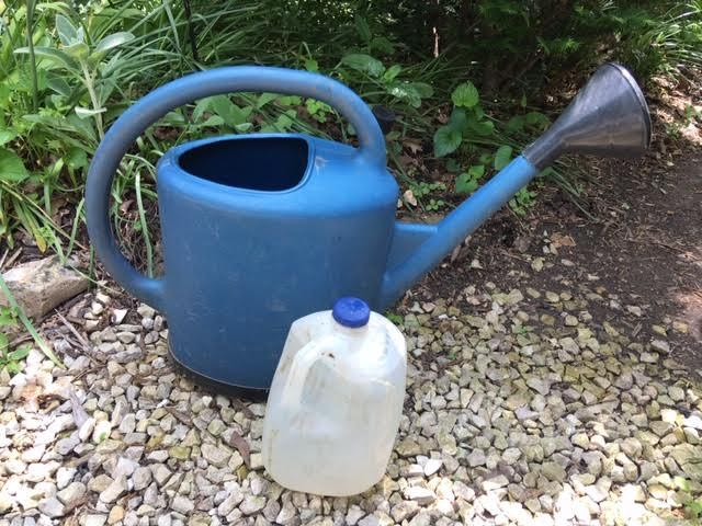 No need for a watering can, you can also repurpose a one gallon milk jug. (Photo by Charlotte Ekker Wiggins)