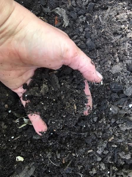 Still amazes me when compost is done and ready for use. (Photo by Charlotte Ekker Wiggins)