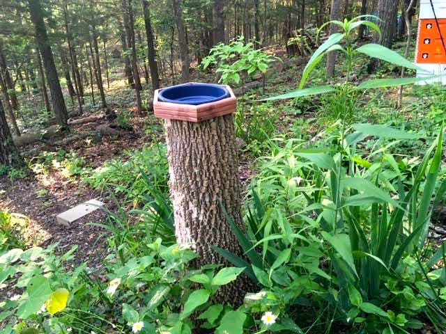 Repurpose tree stumps into bird bath pedestals. (Photo by Charlotte Ekker Wiggins)