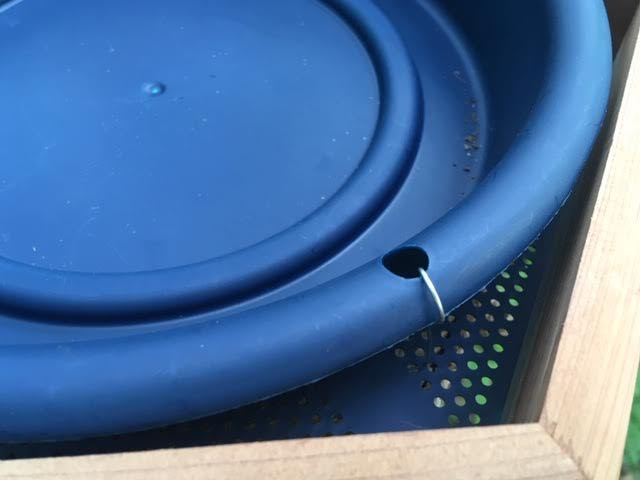 Tie down the blue plastic birdbath to the bottom. (Photo by Charlotte Ekker Wiggins)
