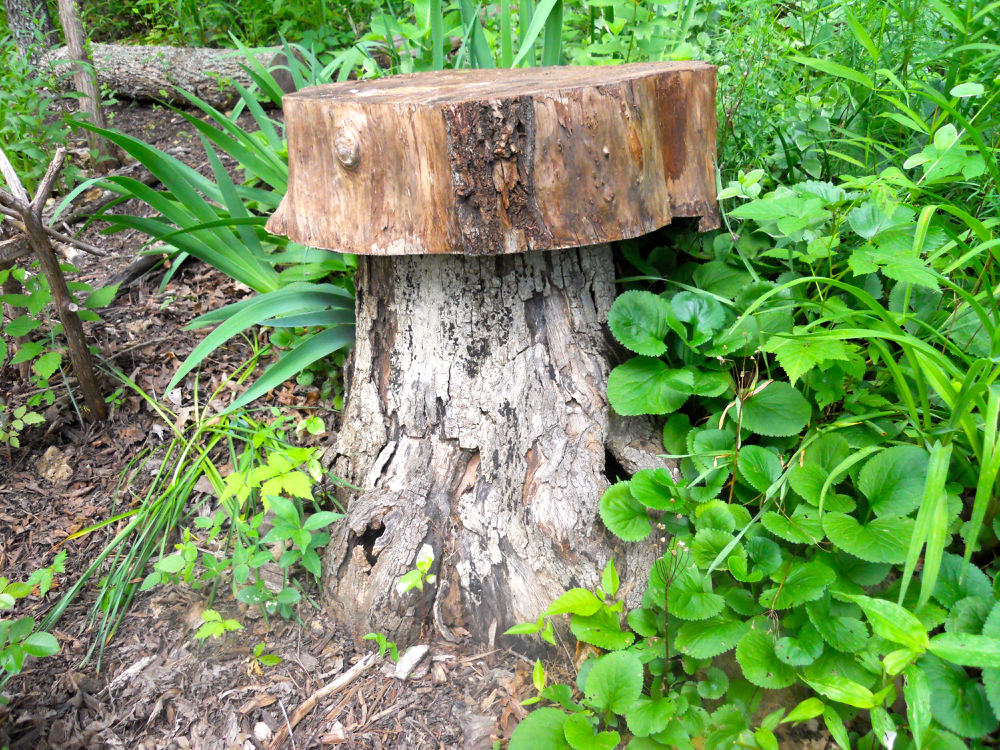 Finally have the proportions right of the top wooden piece, my tree stump toadstool! (Photo by Charlotte Ekker Wiggins)