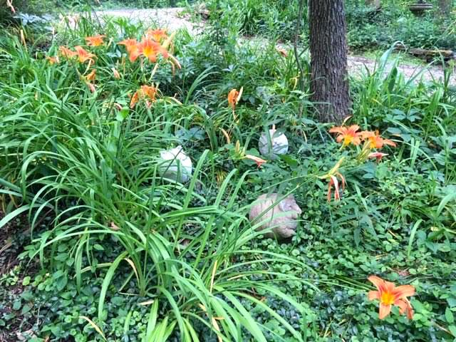 "My garden ""cats"" sitting in the middle of Missouri orange daylilies. (Photo by Charlotte Ekker Wiggins)"