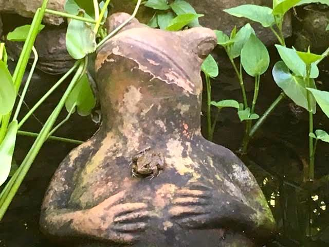 My clay ceramic pond frog now has a friend. (Photo by Charlotte Ekker Wiggins)