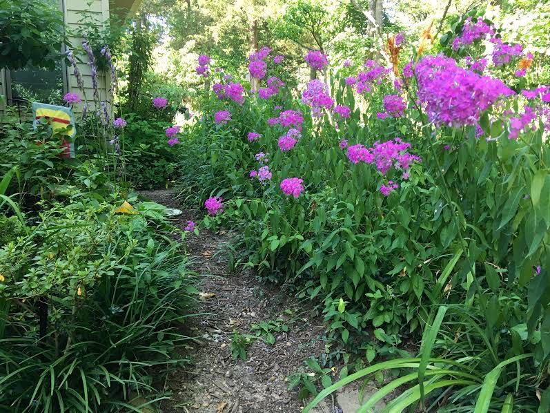 I tried to get the phlox to grow on the left but it moved to the right. Oh, well! (Photo by Charlotte Ekker Wiggins)