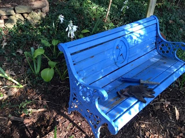 These gift August lilies have been planted behind a bench so I can enjoy the fragrance while seated. (Photo by Charlotte Ekker Wiggins)