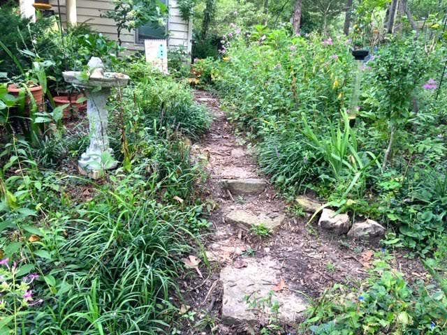 I use monkey grass on my limestone hillside to mark paths. (Photo by Charlotte Ekker Wiggins)