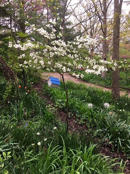 Here's the same dogwood tree nicely mulched in spring. (Photo by Charlotte Ekker Wiggins)