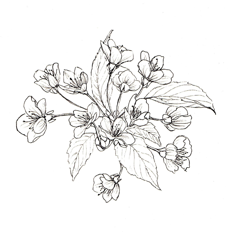 Blossom002_1500hw.jpg