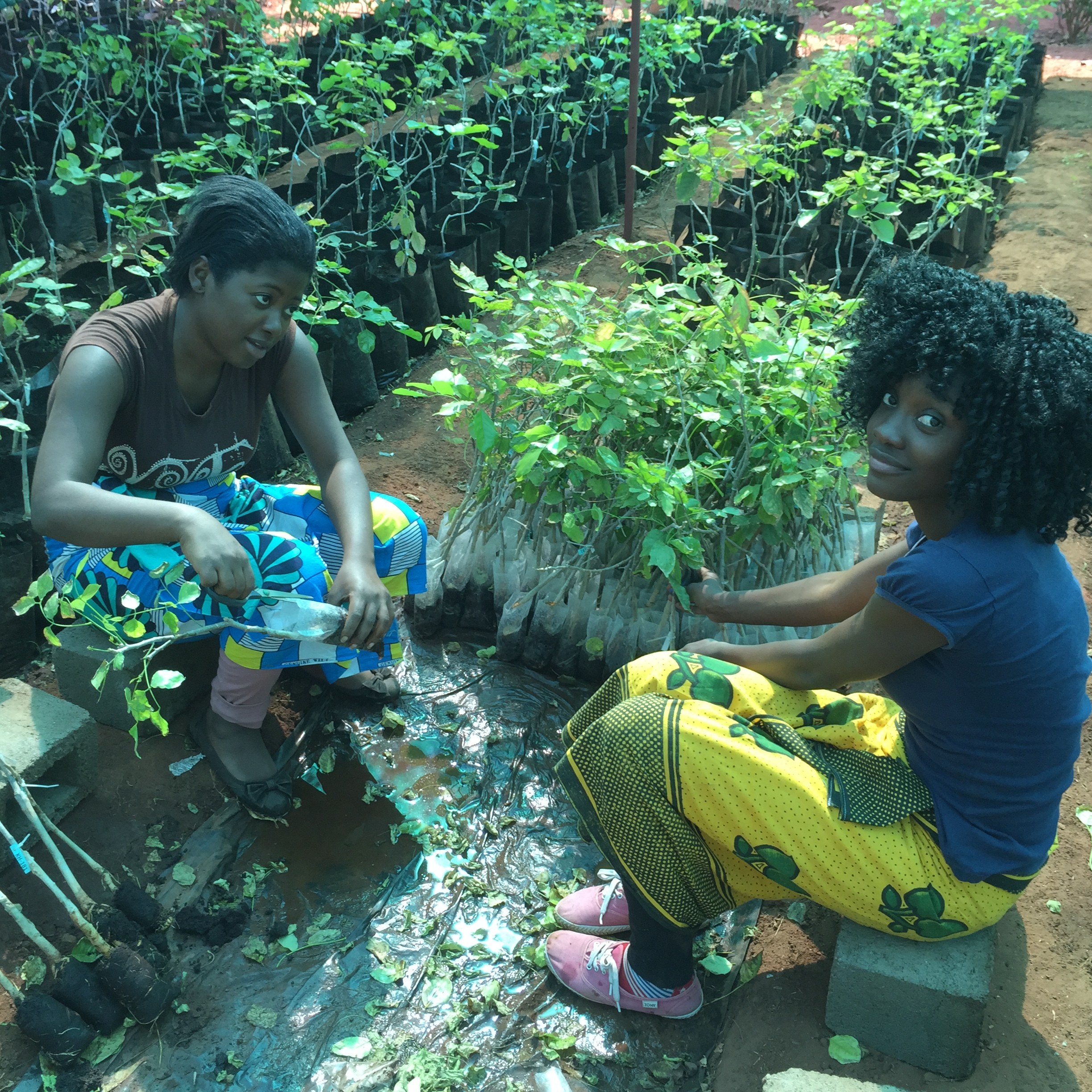 Ladies caring for the SAPLINGS