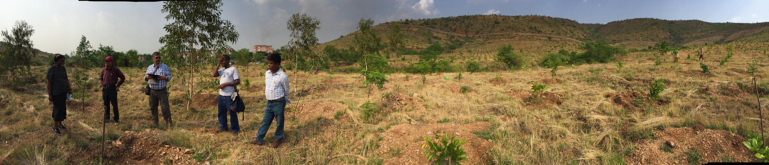 Visiting  plantation at JSW in Karnataka