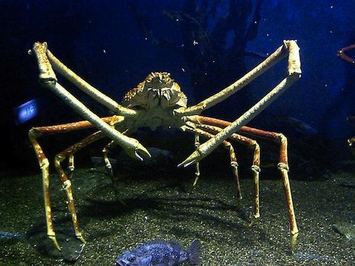 crab enhanced-12358-1409838685-1.jpg