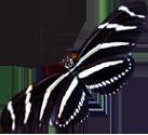 Zebra-Butterfly-2.png