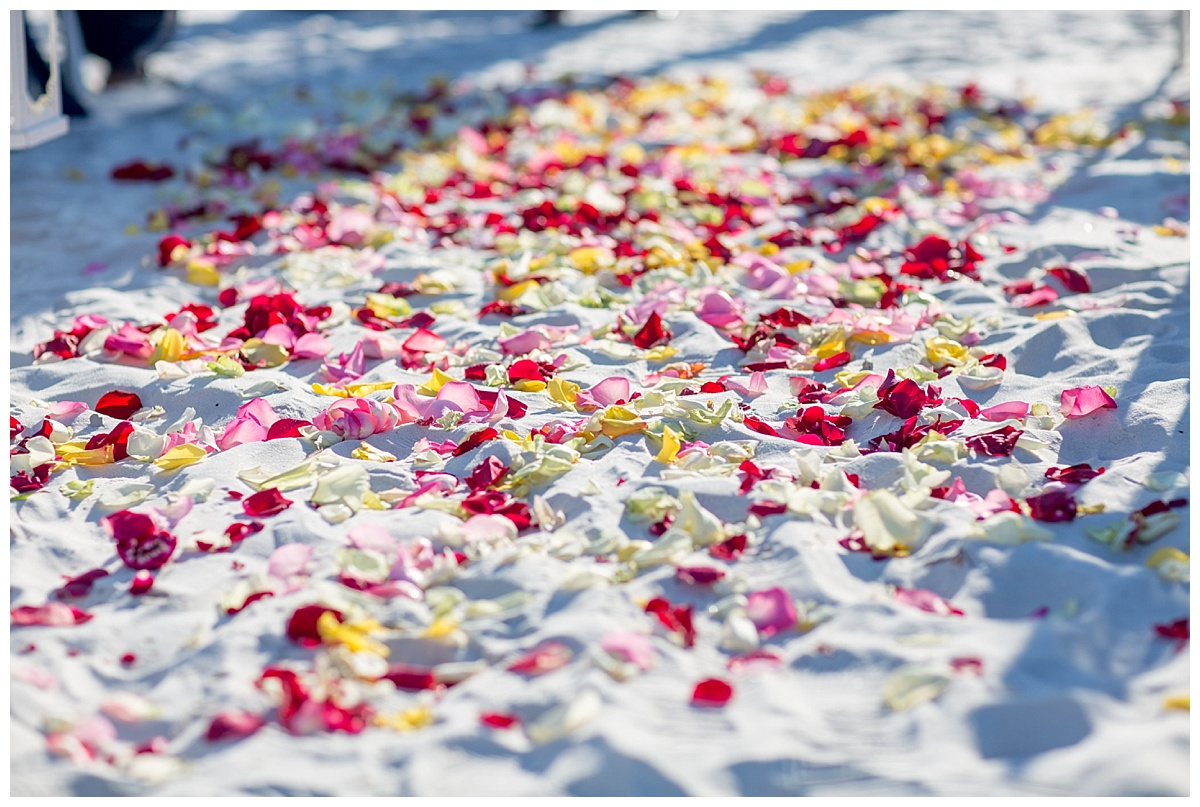 4 Rose Petals for a beach wedding .jpg