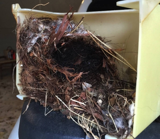 Birds nest in garage door opener light cover that started to catch fire