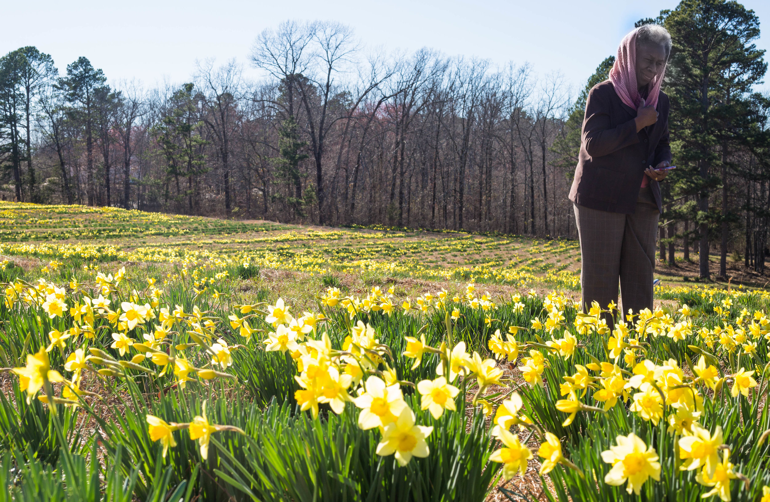 Lucille Rogers enjoys a stroll through Wye Mountain Church's famous daffodil field with her other Latter Day Saint friends on a sunny Arkansas Sunday.
