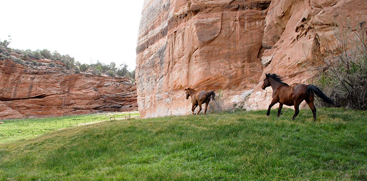 horses-running-angel-canyon_0.jpg