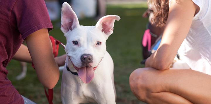 white-pittie-puppy-smiling.jpg