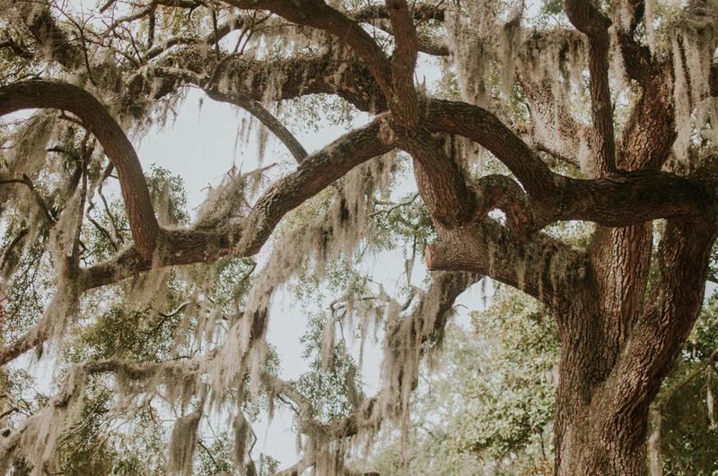 Savannah - Georgia
