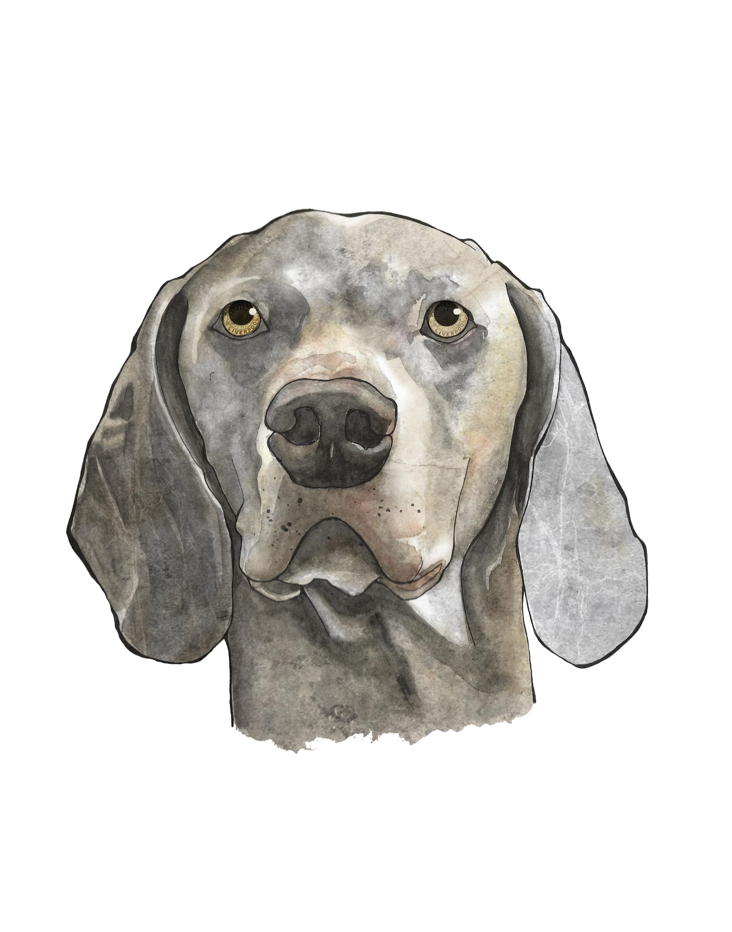 Jamies dog Beau texture.jpg