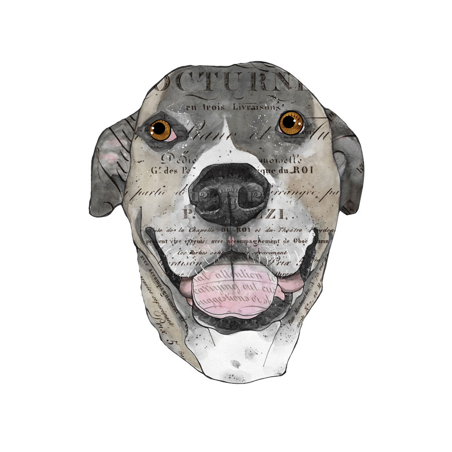 John's-dog-1-12x12-canvas.jpg