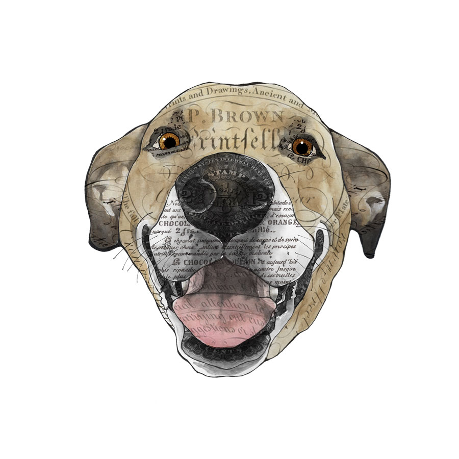 John's-dog-2-12x12-canvas.jpg