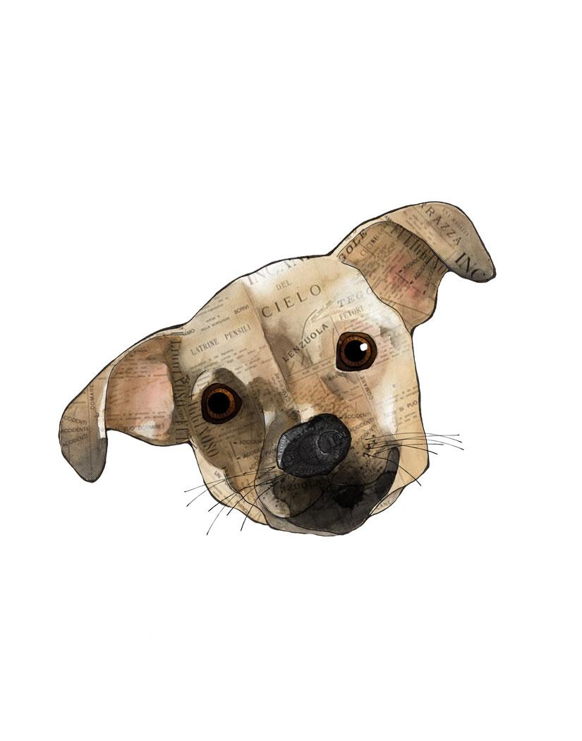 Wendy-Olive-dog.jpg
