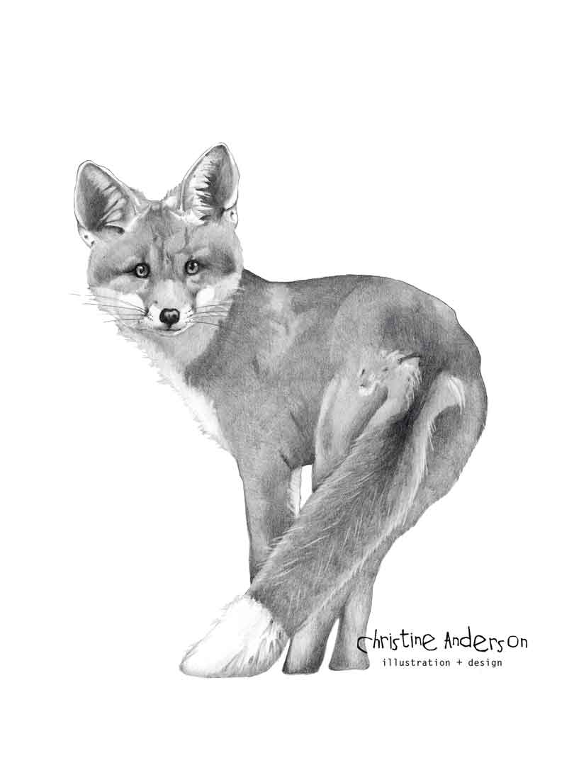 fox-graphite-DARK-INSTA.jpg