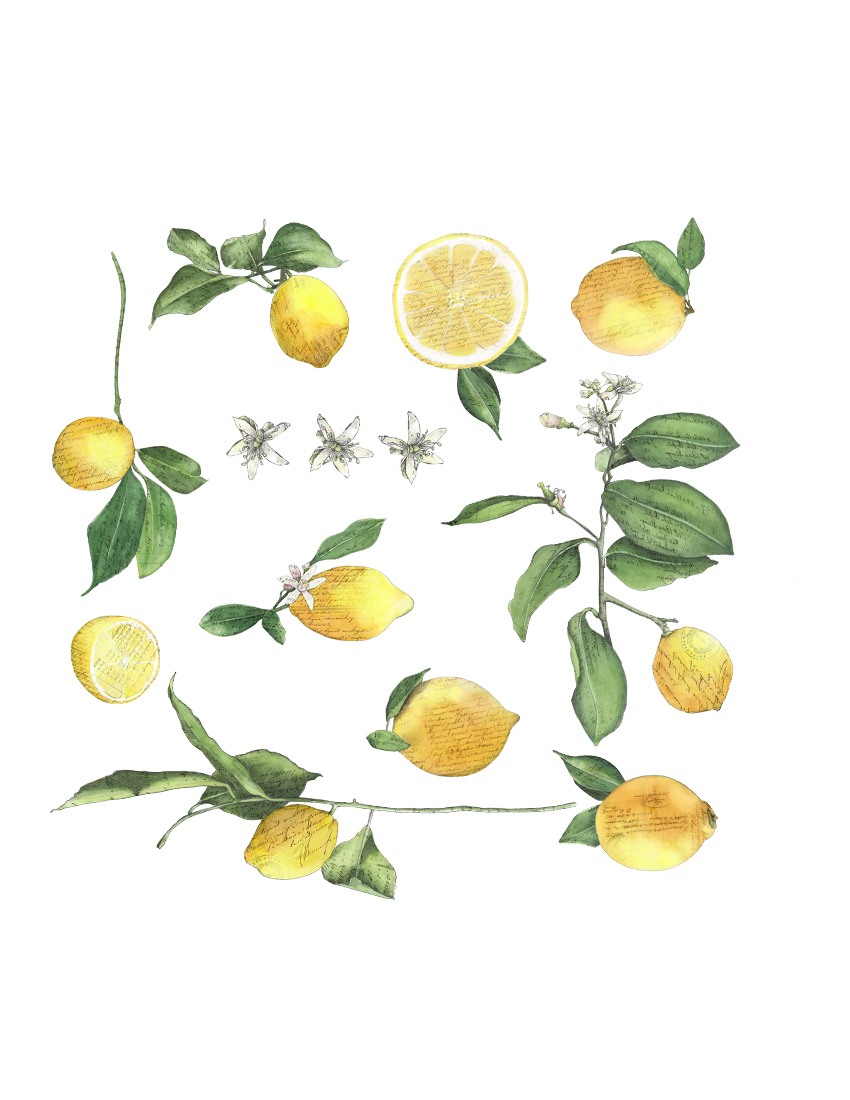 CA Lemons pattern.jpg