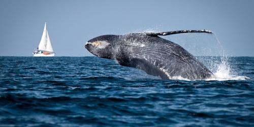 whale_tours.jpg