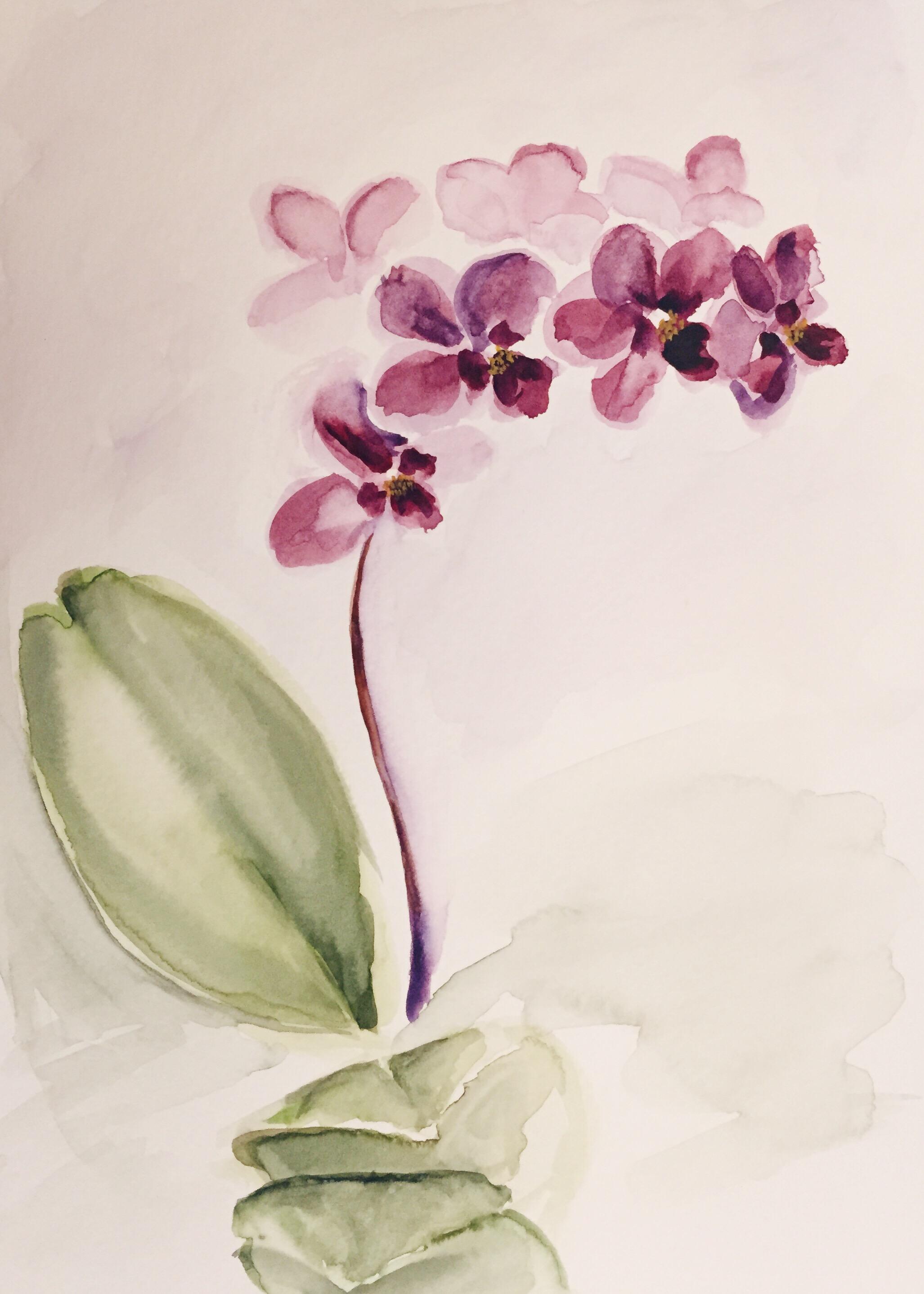orchid-02.JPG