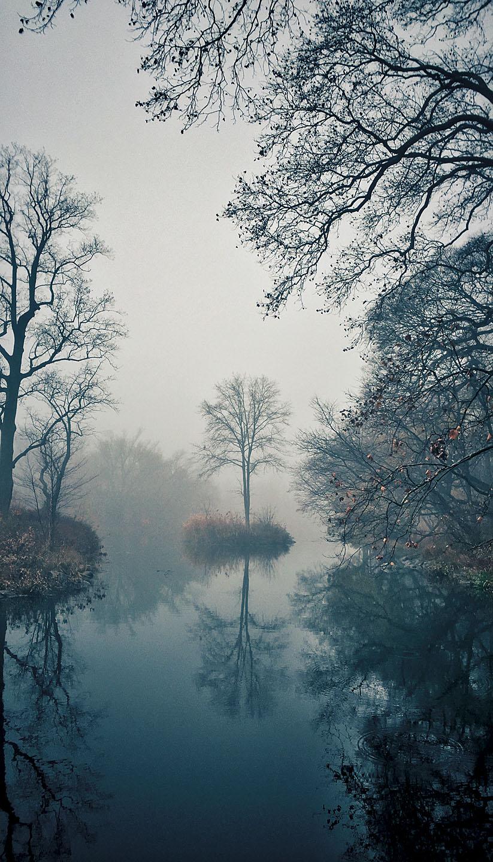 Single Tree Fog
