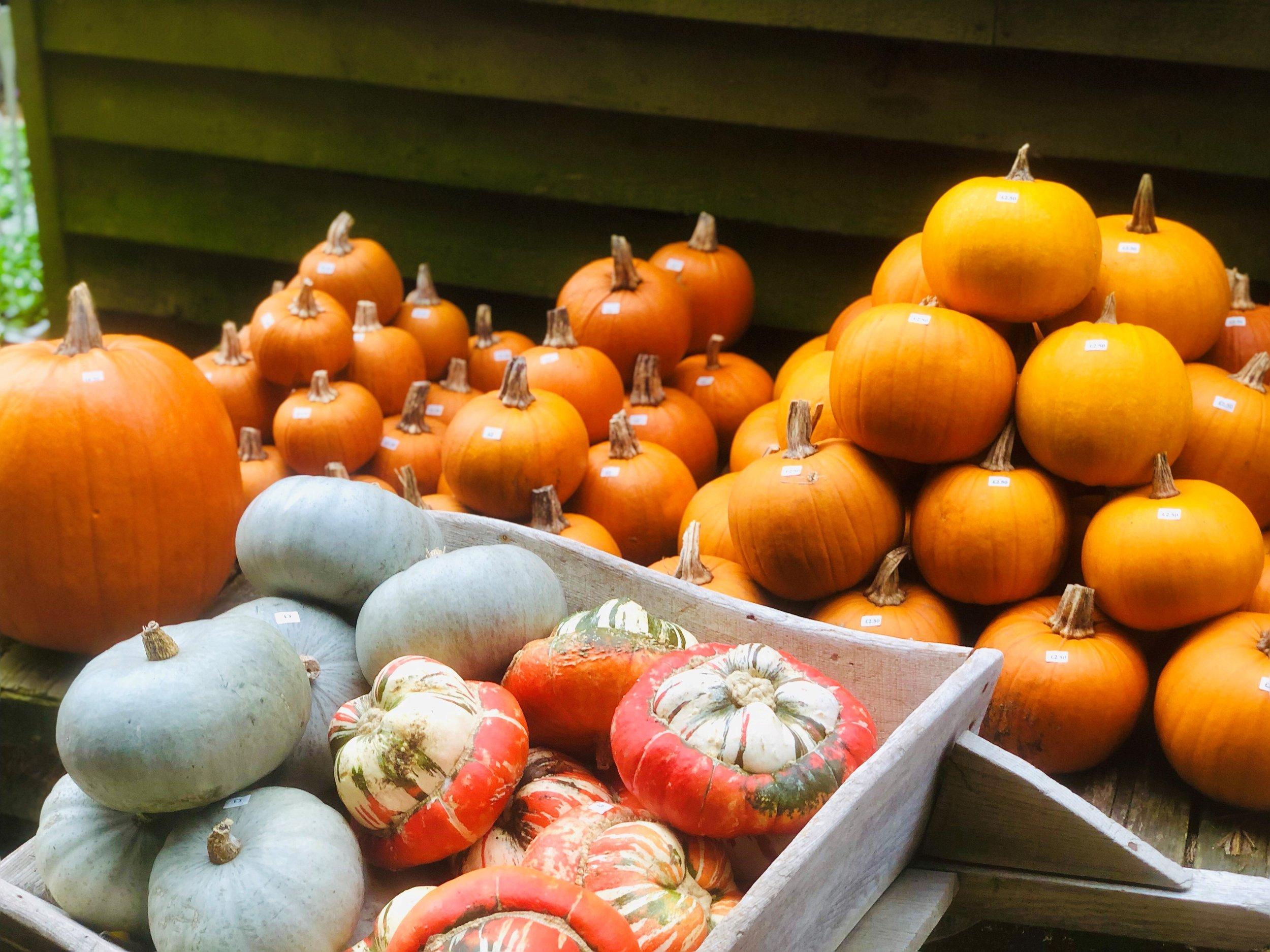 Pumpkins 2018.jpg