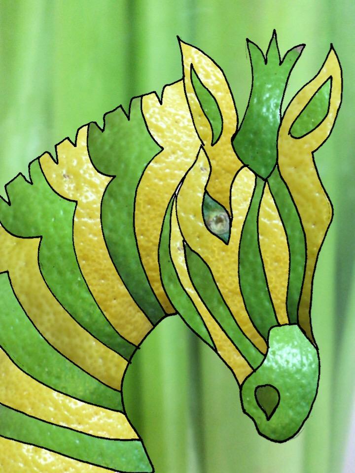 03-zebra-citrus.JPG