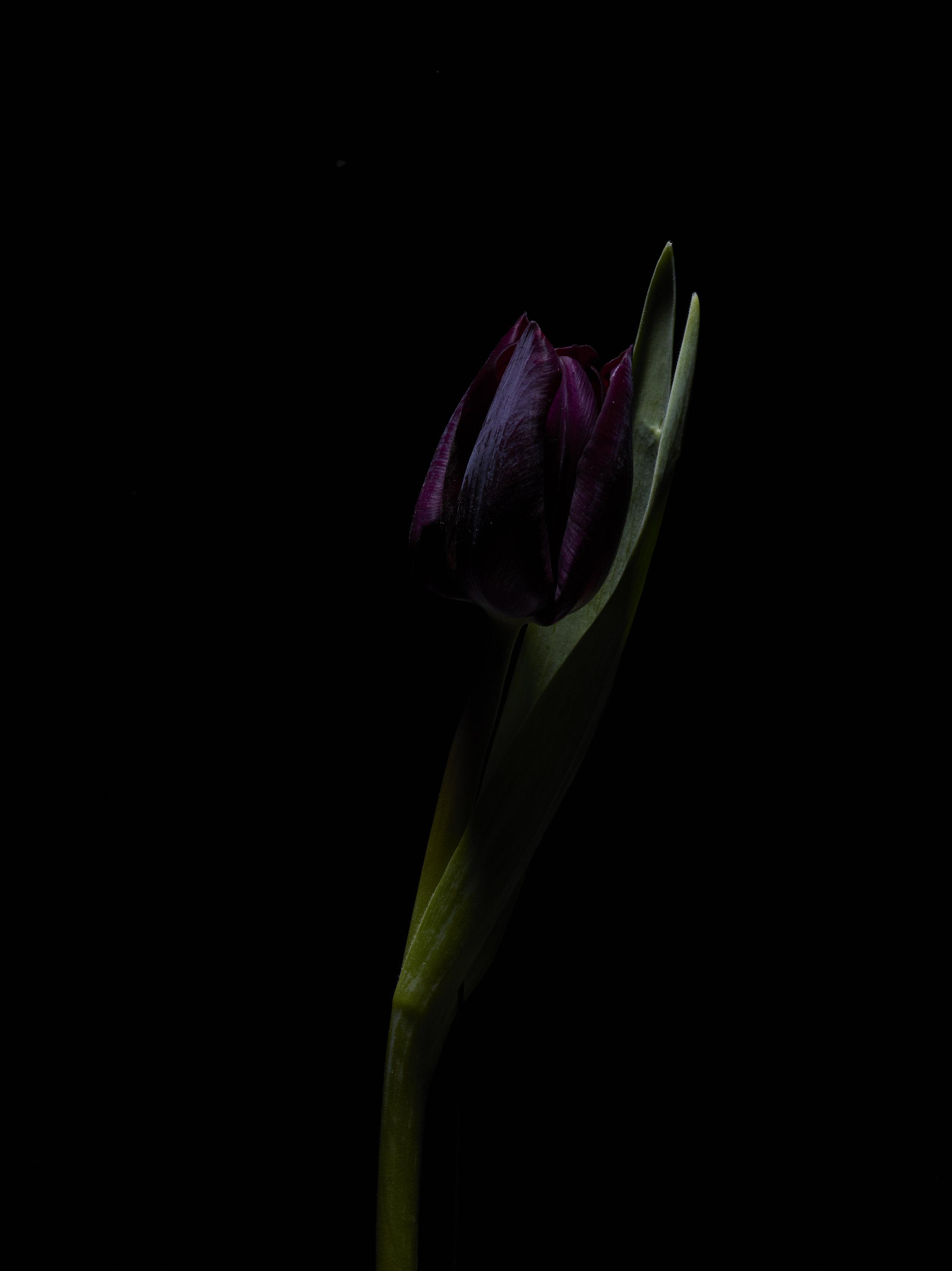 Winter Flora - Subject B.jpg