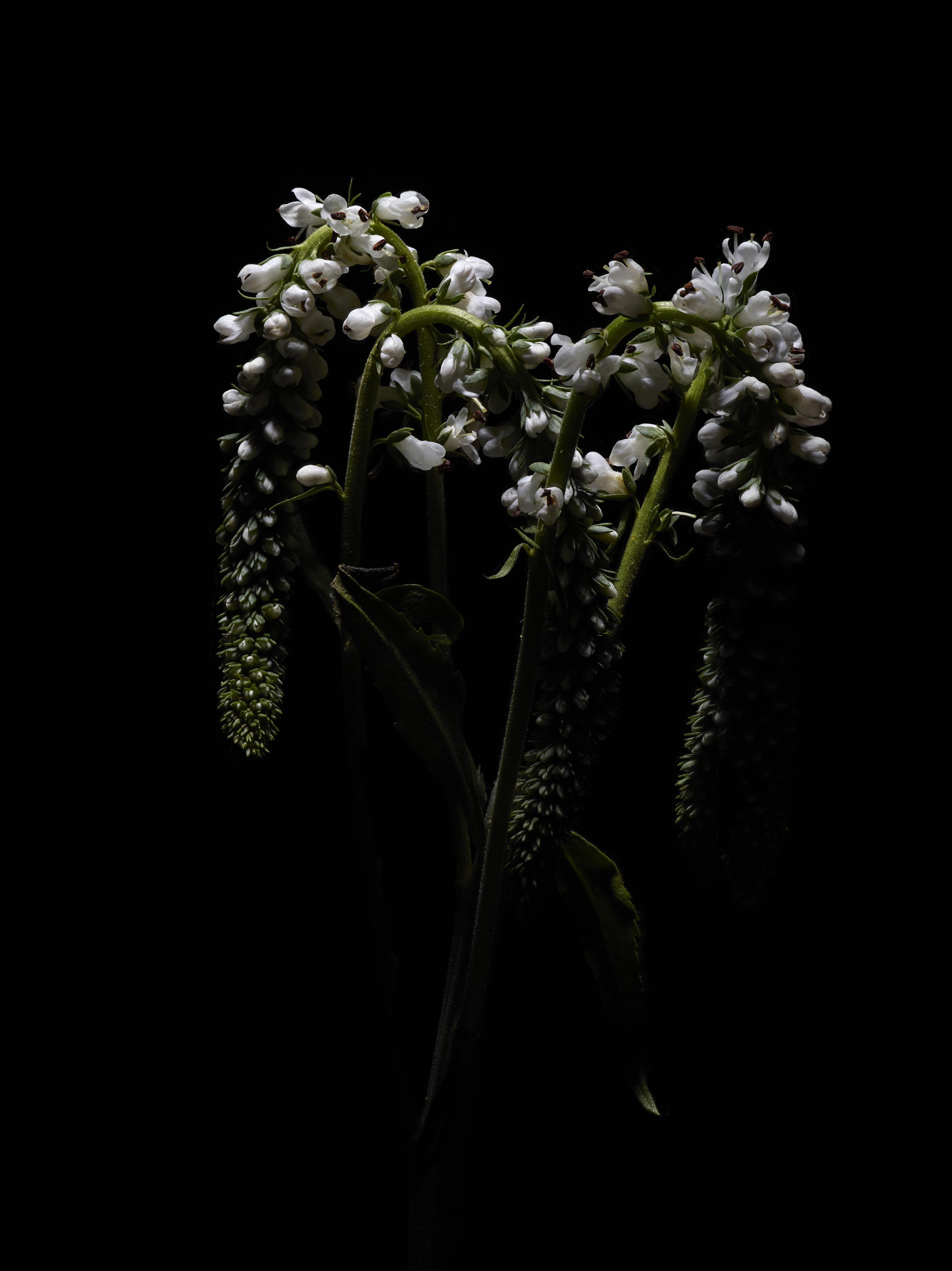 Winter Flora - Subject A.jpg