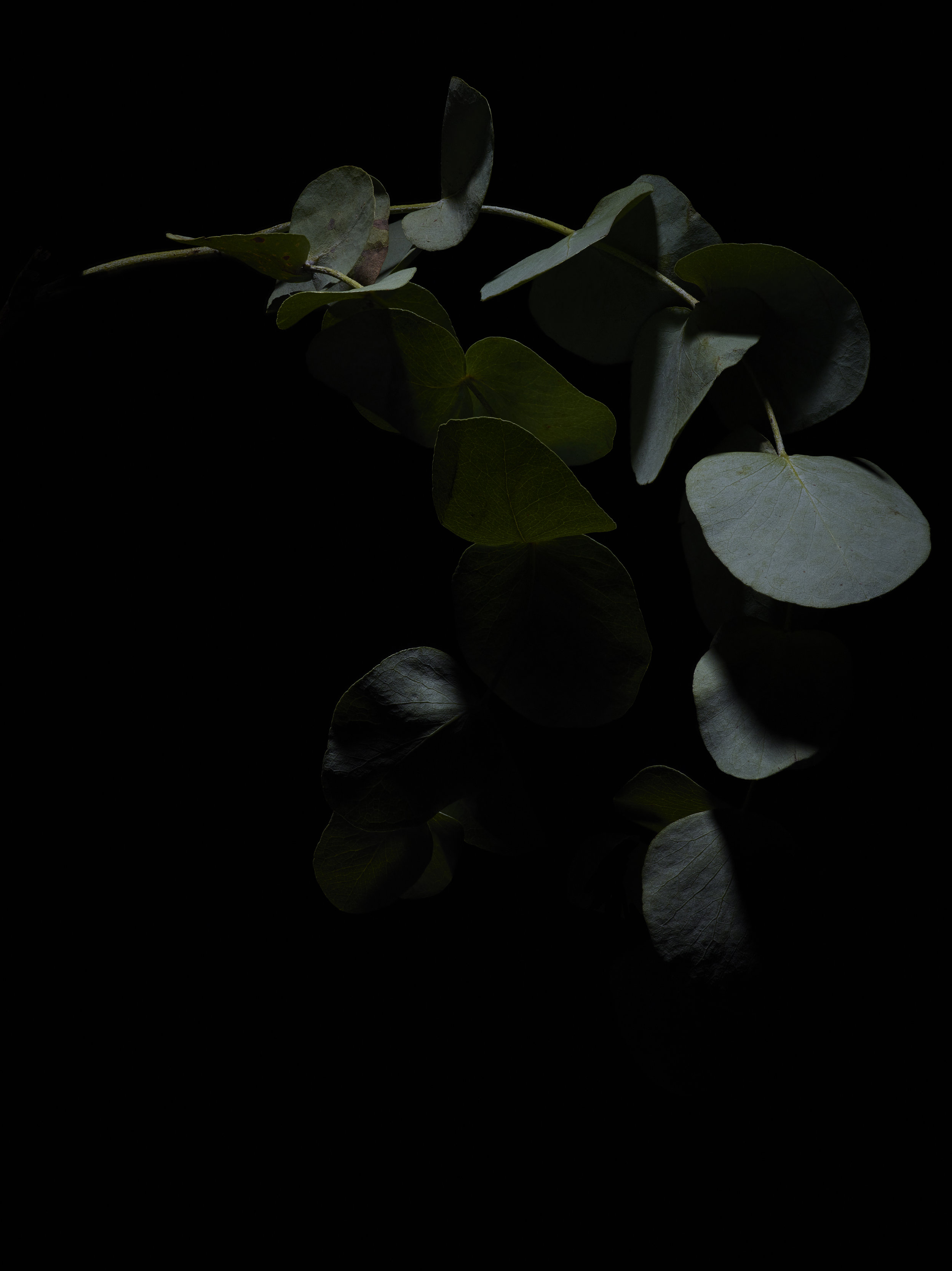 Winter Flora - Subject C.jpg