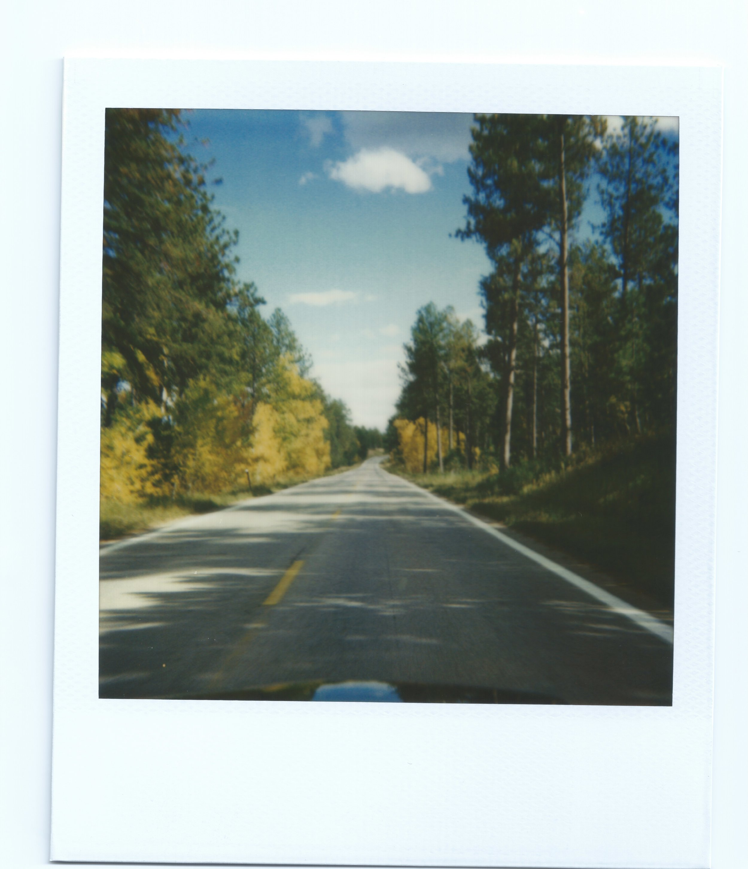 Road_8_fallcolor_binder3.jpeg