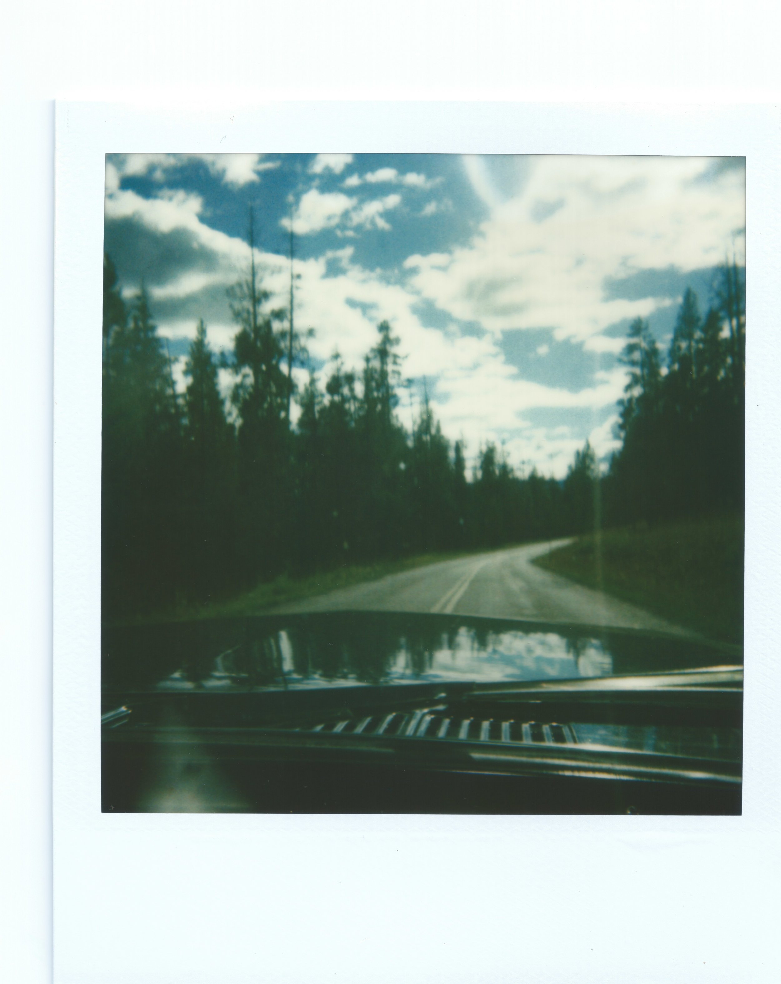 Road_pinetrees_binder6.jpeg