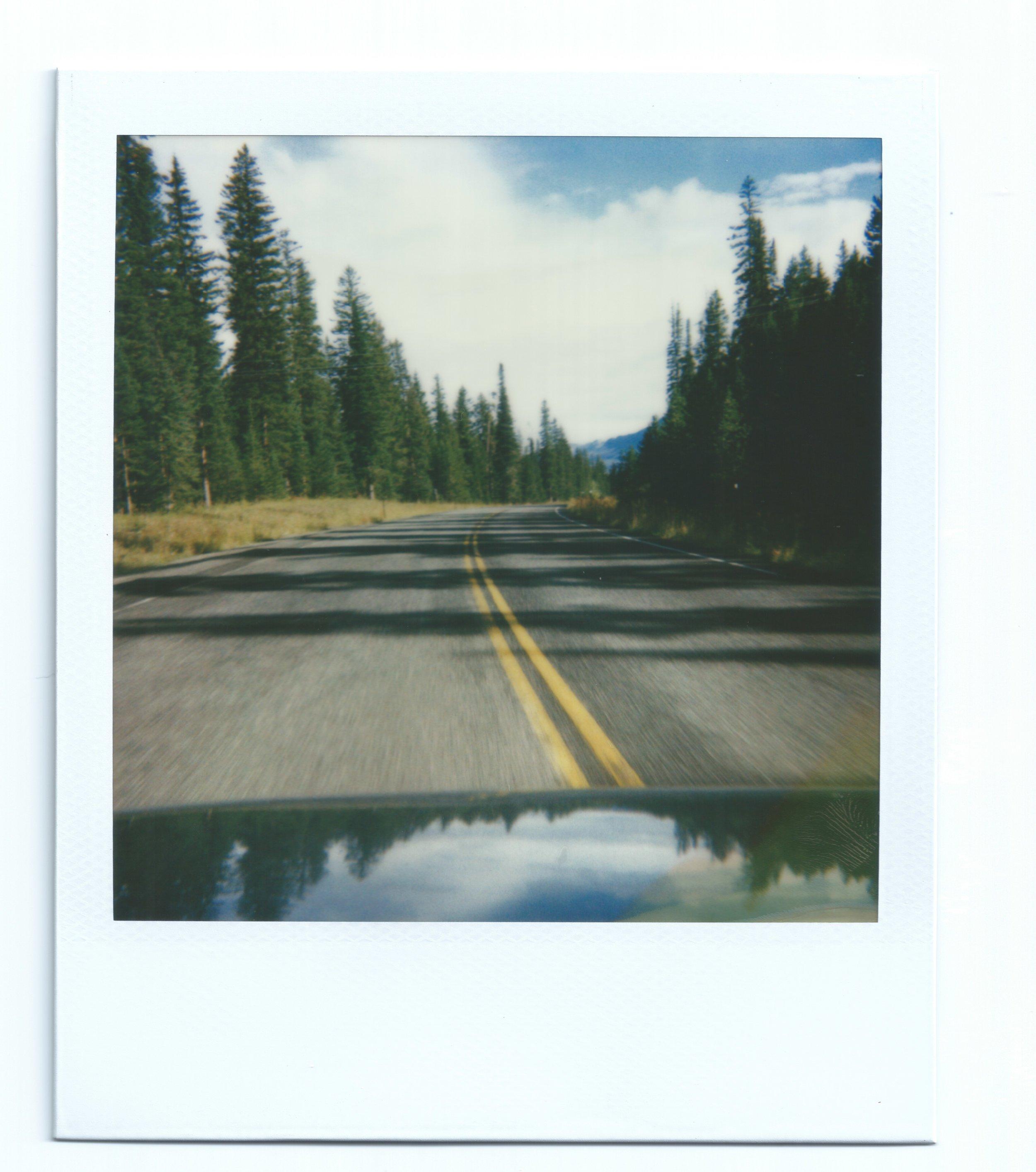 Road_pinetrees2_binder6.jpeg