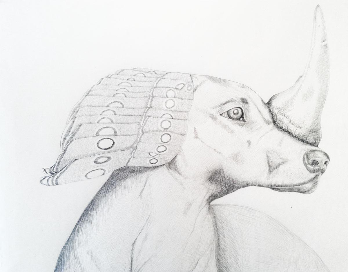 dog peacock rhino_sm.jpg