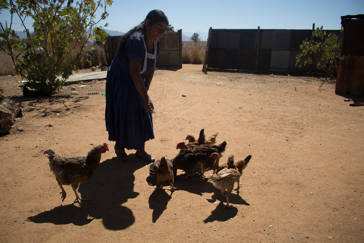 Auria Vargas, 63, feeds her family's chickens in Zaachila, Mexico on Friday, Jan. 13, 2017.