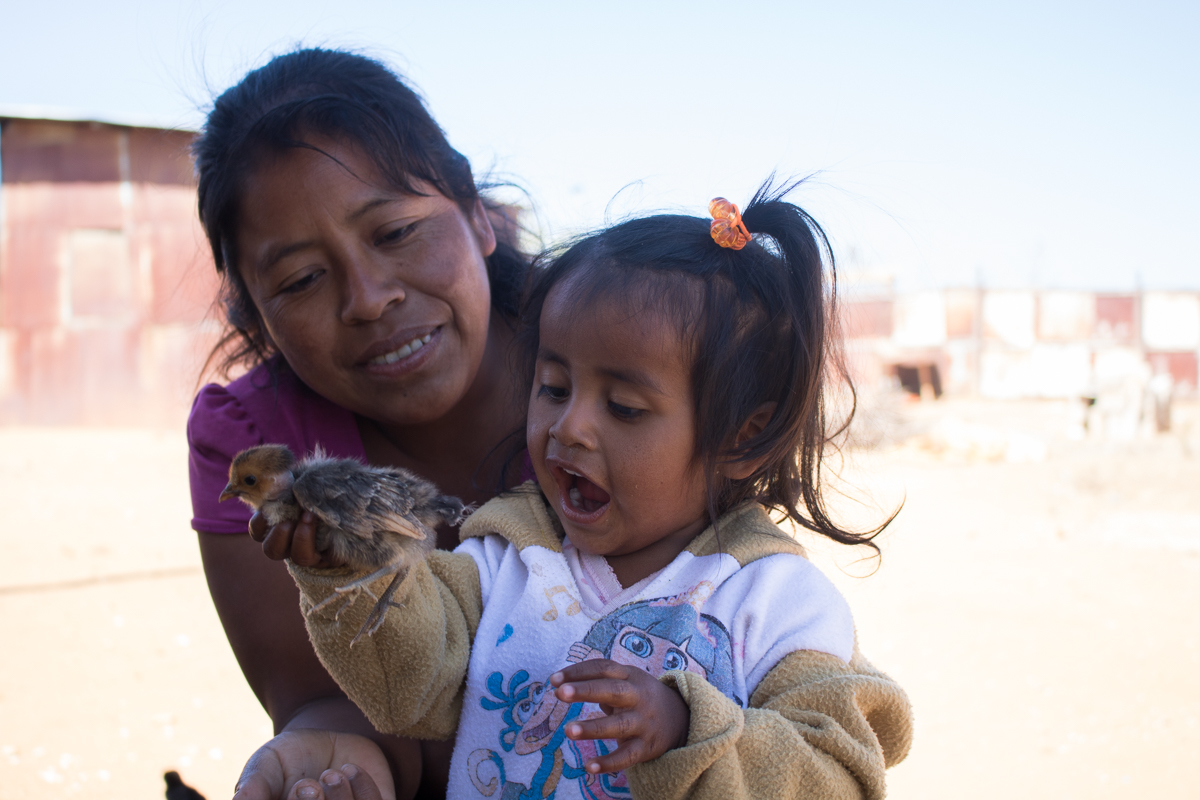 Imelda Vargas, 34, watches as her daughter, Ashliin Vargas, 2, holds one of their family's baby chicks in Zaachila, Mexico on Thursday, Jan. 14, 2017.