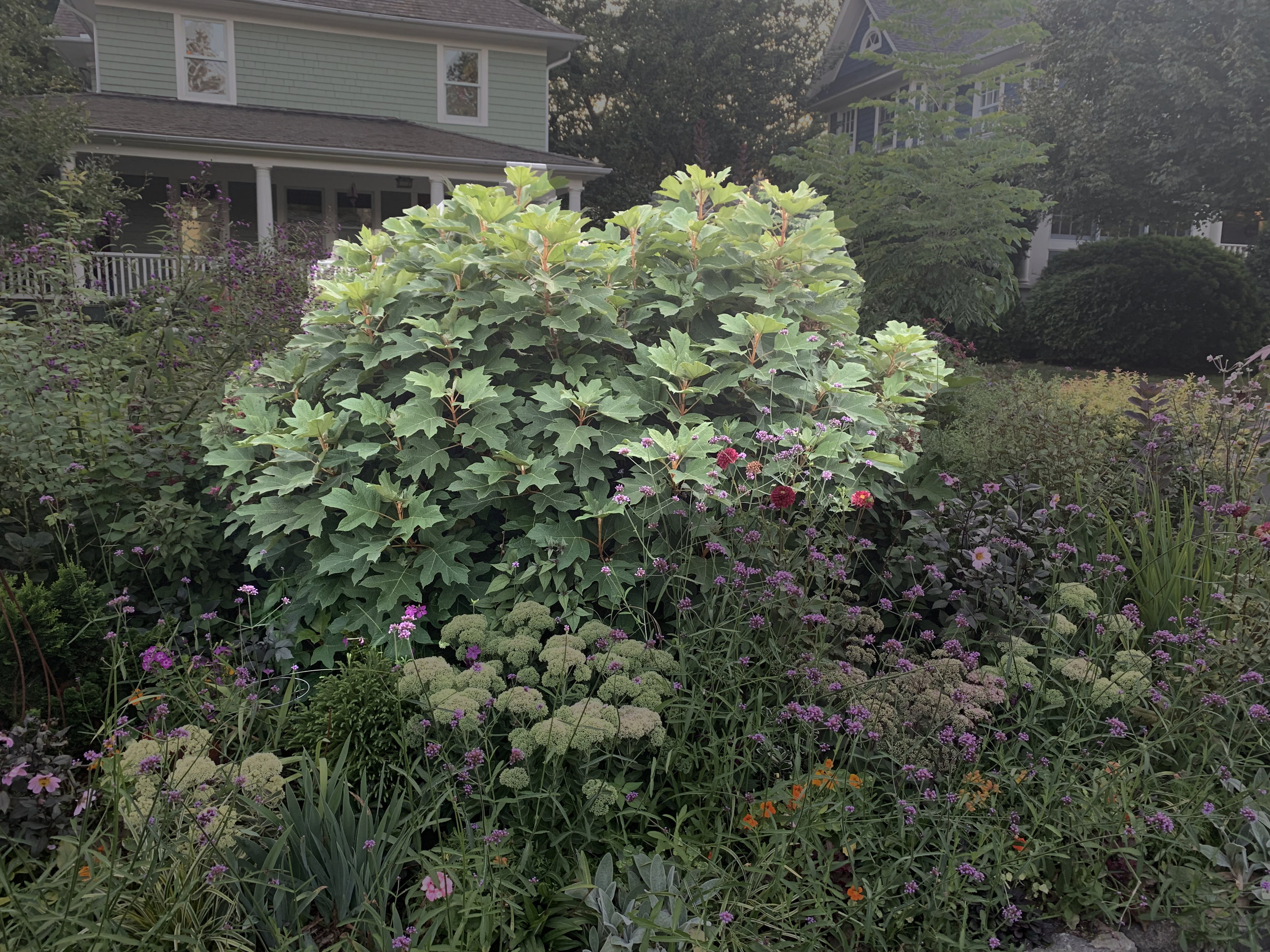 I highlighted the shrub. It's bigger than it looks.