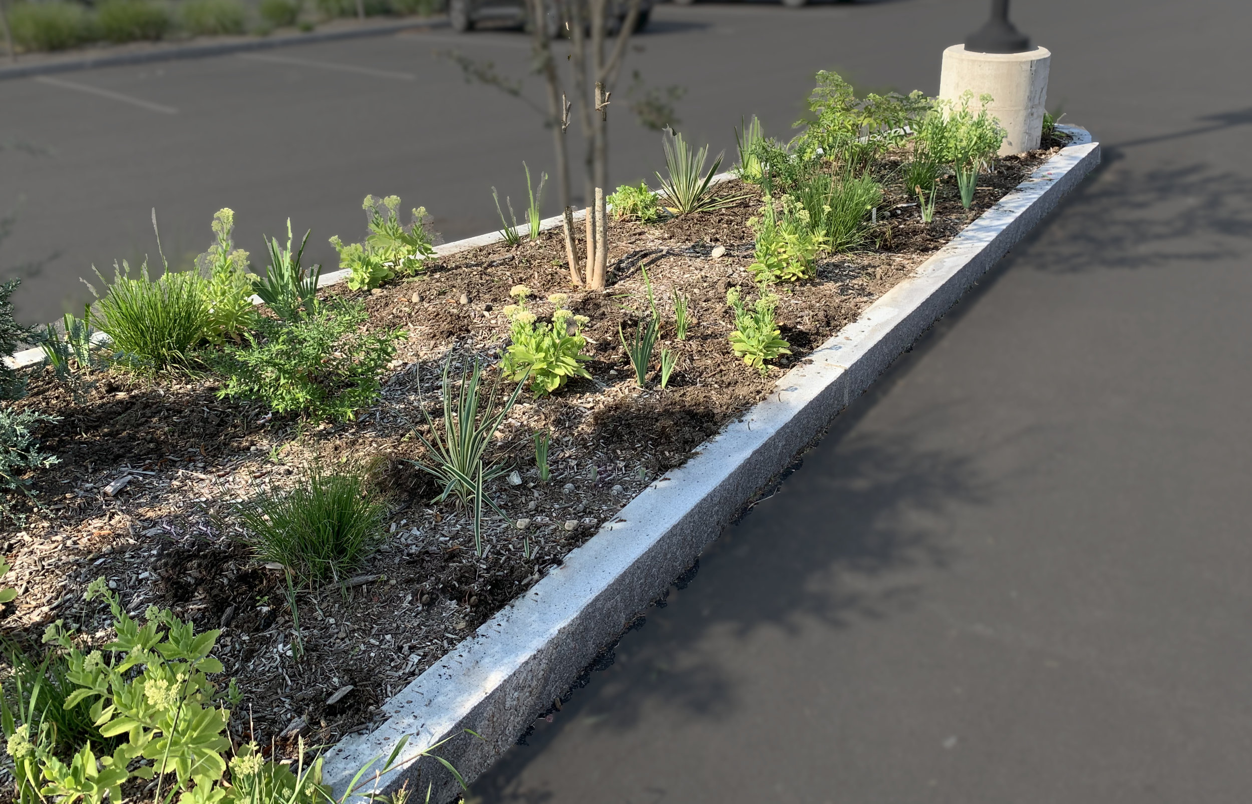 """The Tough Love Border at the Old Greenwich Port of Entry Garden (formerly known as """"That Wall by the Train Station"""")"""