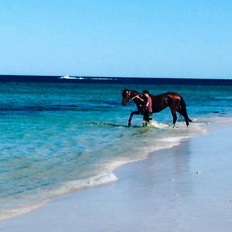 whitfords Dog Beach.jpg
