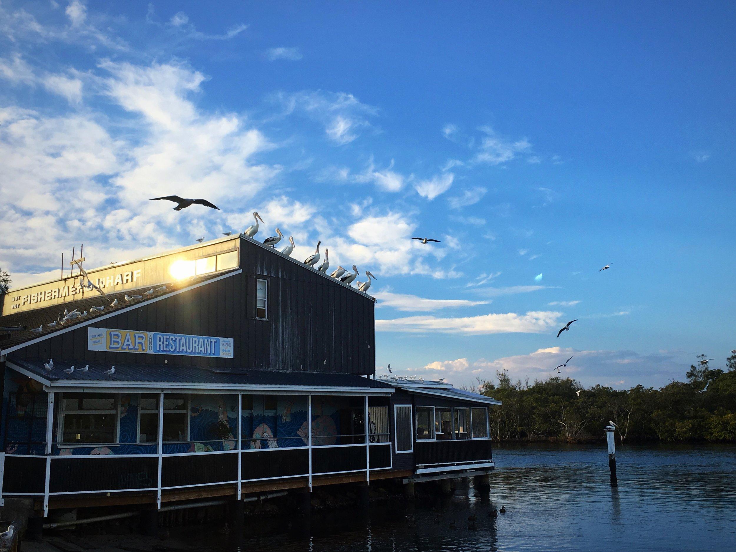 pelican park.JPG
