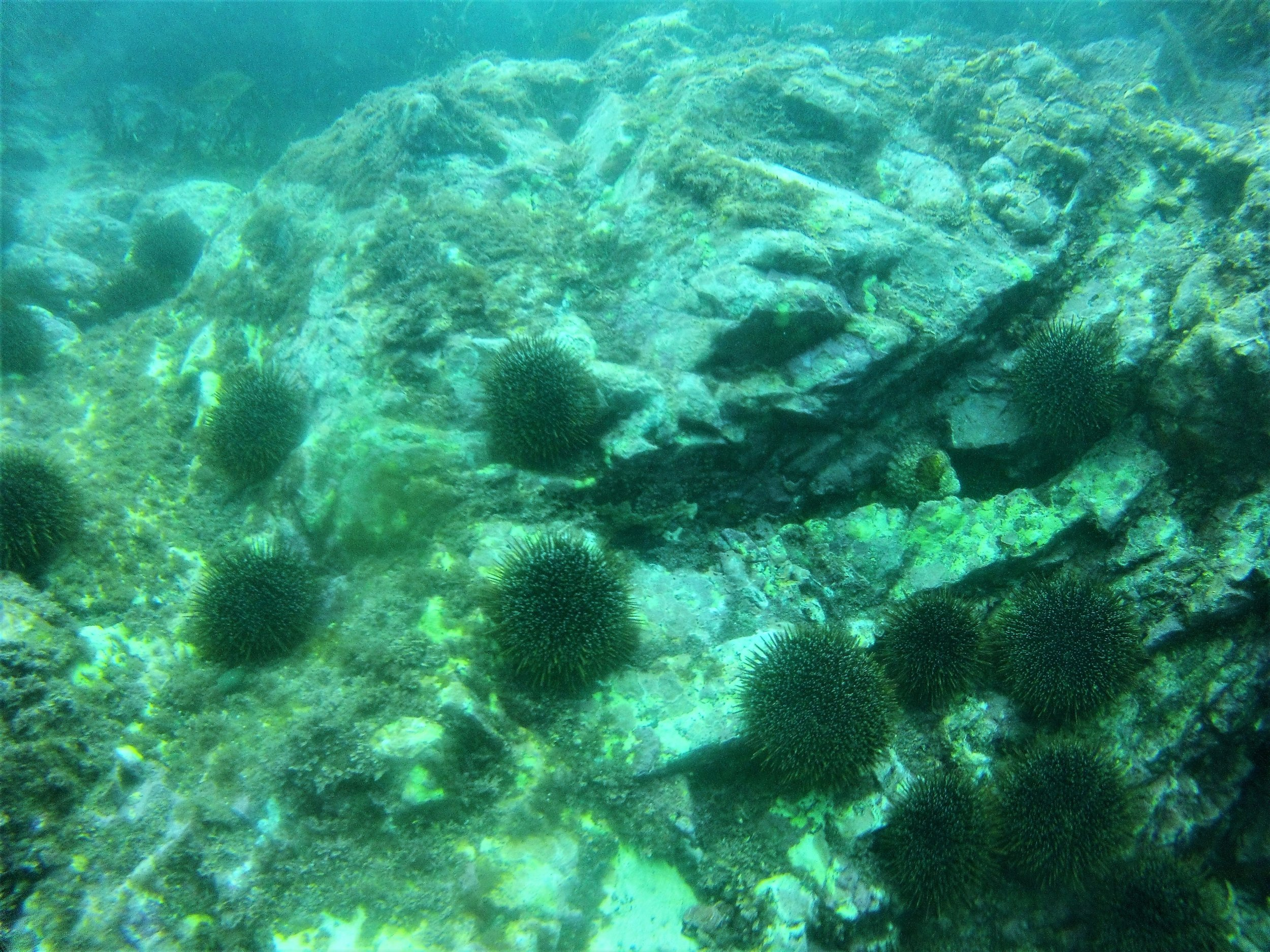 Diving 2 (27).JPG