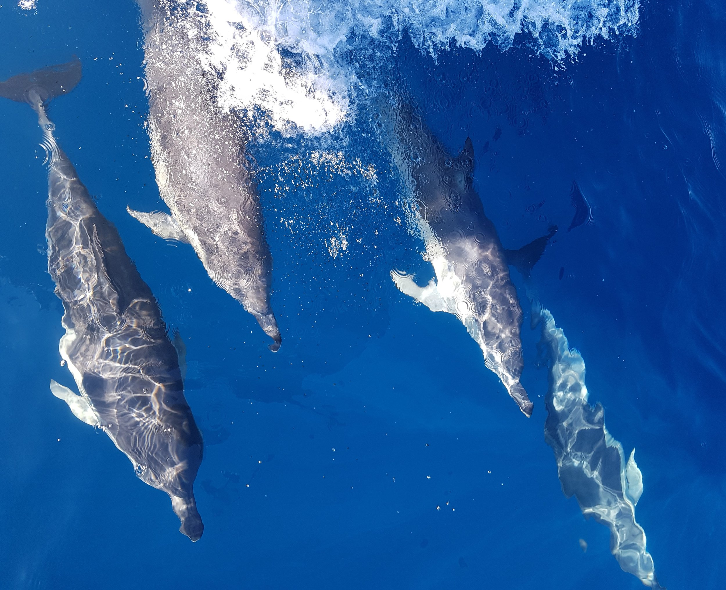 Mayor Island Motiti Snorkeling   Embark on a on a wildlife cruise where you may encounter dolphins, penguins, seals and many other forms of marine wildlife.   Read More