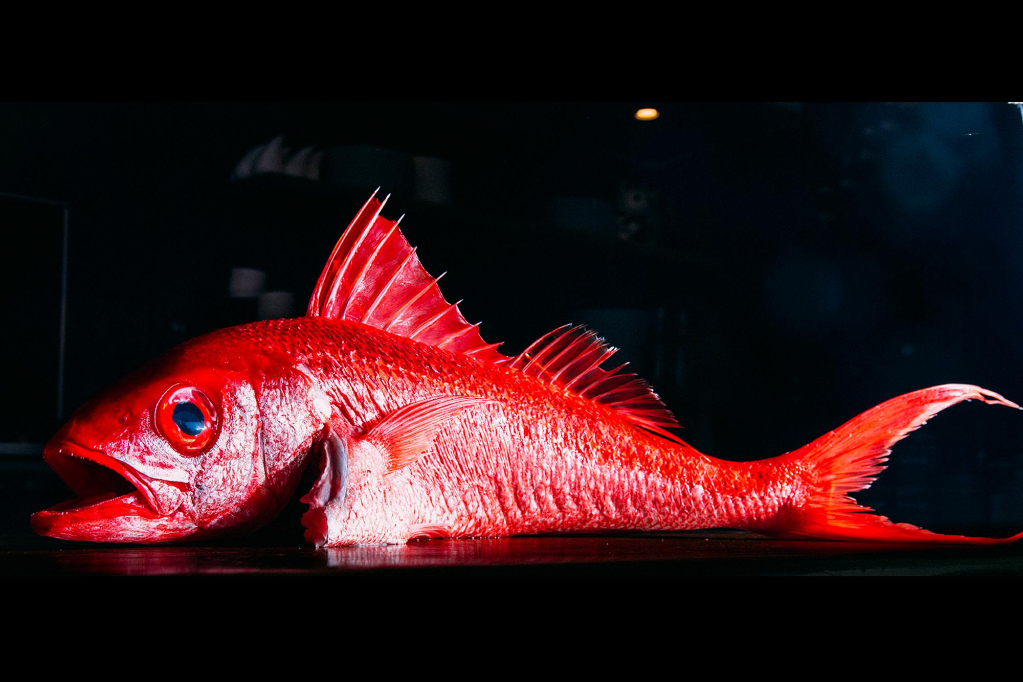 redfish.png